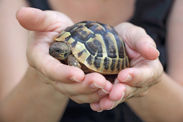 turtle in the palm