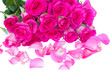 fresh pink  roses bouquet with petals