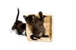 Süße Kätzchen spielen mit Korb