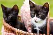 Süße Katzen-Kinder schauen interessiert und ängstlich