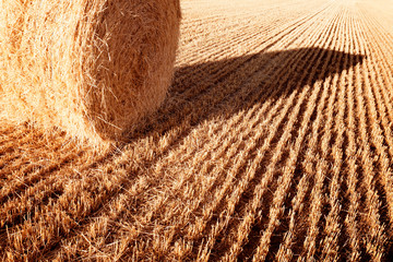 Golden Straw Bale
