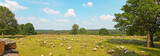 Panoramic landscape of meadow with sheep and trees and blue clou