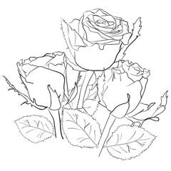 рисунок с розами на белом фоне