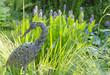 Gartenteich Bepflanzung