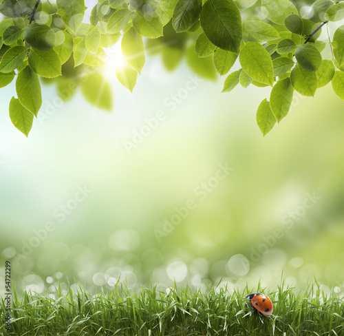 natural green background with selective focus . ladybug