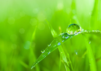 dews on grass