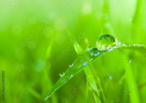 dews on grass