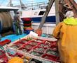 activité sur le port de pêche - 54729611