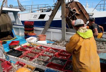 activité sur le port de pêche