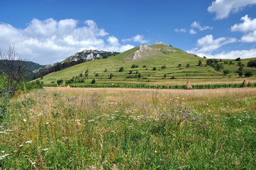 Green hills and meadows, great for pasture