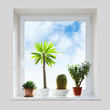 House plants on the windowsill.