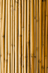 dry bamboo background texture