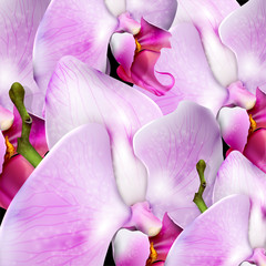 flower background with blossom orchid