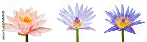 Foto op Canvas Lotusbloem Lotus flower isolated