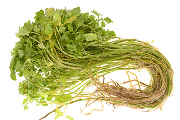 Watercress, An Aquatic Vegetables With Roots
