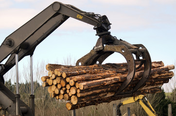 New Zealand Forest Products