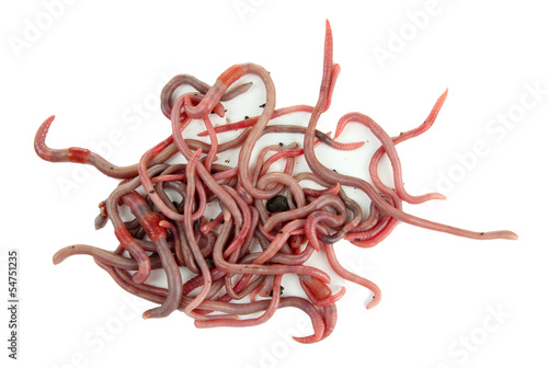 Worms isolated on white