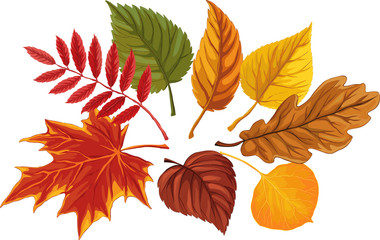 Set of autumn leaves over white background