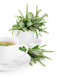 Cup of herbal tea with fresh mint flowers isolated on white