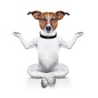 canvas print picture - yoga dog