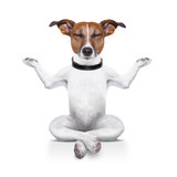 yoga dog - Fine Art prints