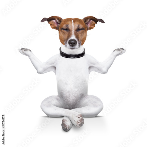 canvas print picture yoga dog