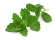 Stevia – A substitute of sugar