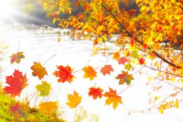 Blättertanz am Wasser in Herbstsonne