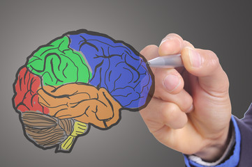 Businessman hand write Head Brain