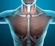 Corpo umano uomo raggi x muscoli pettorali collo