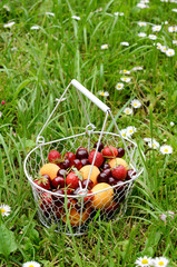 Fruit and berry mix in wire basket