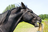 horse sharpens its teeth on a wooden pole