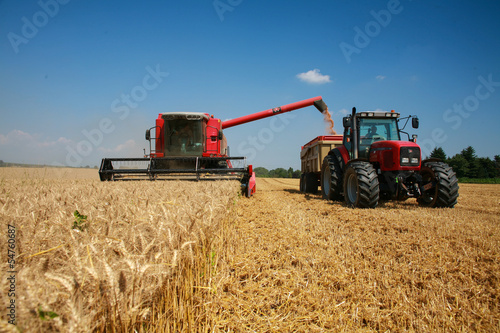 Poster Cultuur récolte du blé
