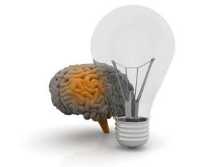 Human brain  and  bulb