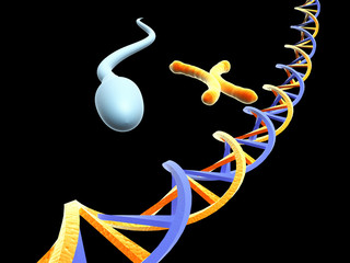 dna and chromosomes with sperm