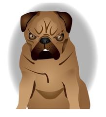 Angry Pug Dog
