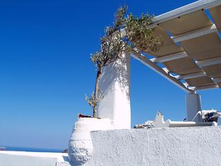 Ulivo Grecia