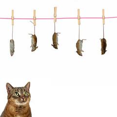 Katze mit Mäusen