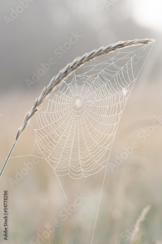 Wet spider web on a plant