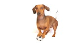 HD - Dog bark with a soccer ball