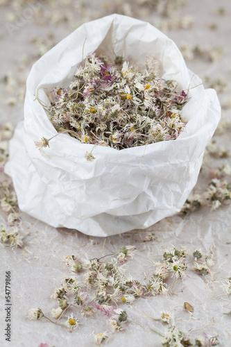 Dry daisies