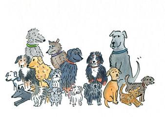 hunde,rudel