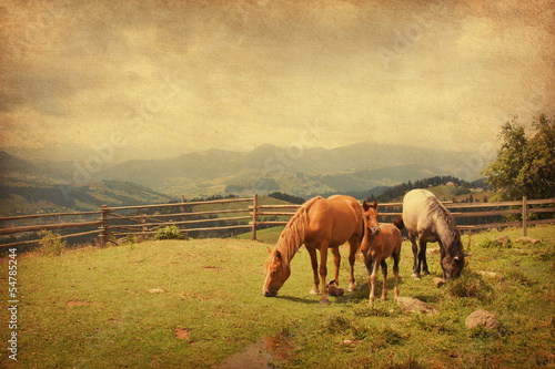 Two horses and foal  in meadow.  Paper texture.