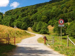 Passage de route dans parc à vaches