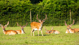 New Forest deer Hampshire England