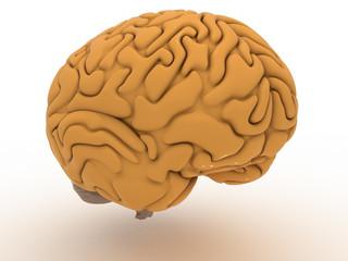 Big Brain #1