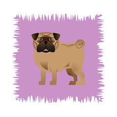 Angry Pug Dog 2