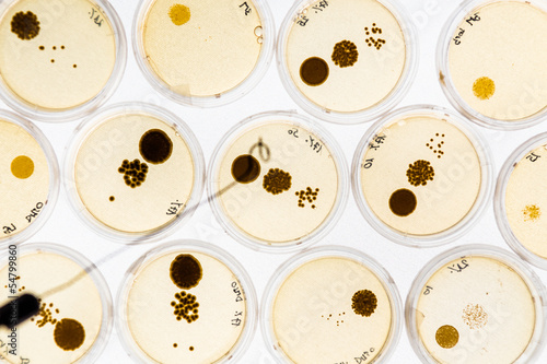 Growing Bacteria in Petri Dishes. - 54799860