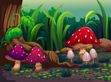 Giant mushrooms in the forest