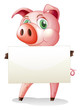 A fat pig holding an empty signboard